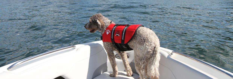 Med en flytväst för hund eller katt kan du ta med din fyrbenta vän på sjön